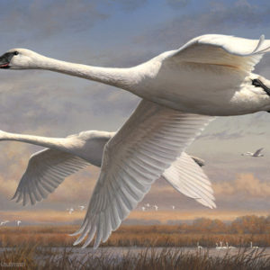 2016 Federal Duck Stamp Print by Joseph Hautman